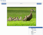Viewing a gallery image in Composr